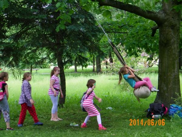 Drzewo 312-1